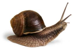 Wie sich langsame Ladezeiten im E-Commerce auswirken
